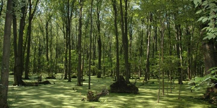 Swampland from cacheland.com