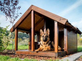 "Dog House saved from stateman.com, credit given to ""Contributed."""